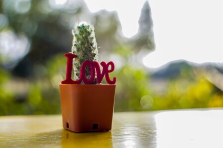Cactus and love are on the yellow table with natural bokeh as the background.        Zdjęcie Seryjne