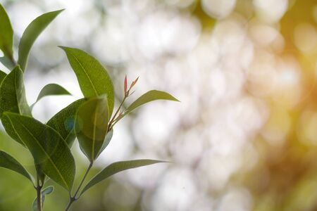 Green leaves with natural bokeh as the background