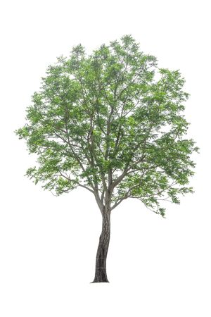 trees on a isolated white background.