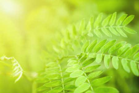 Green leaves pattern texture background Banco de Imagens