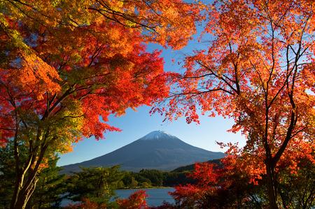 kawaguchi: Mt.Fuji in autumn