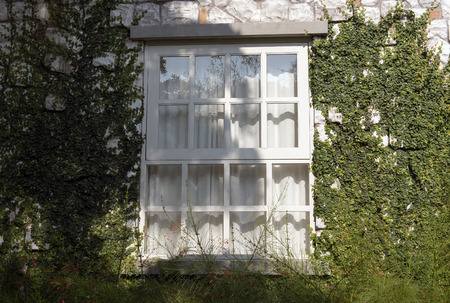 creeping plant: window covered with green ivy Stock Photo
