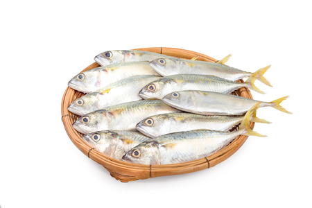 fresh mackerel fish in basket on white background