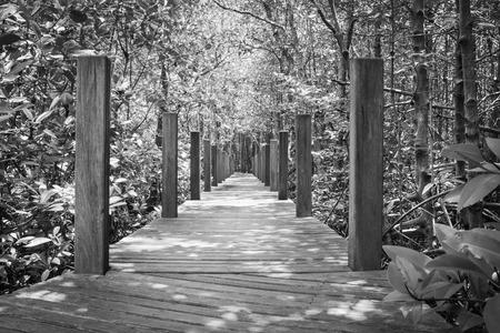 wooden bridge: wooden bridge in the Mangrove forest,monochrome color style.