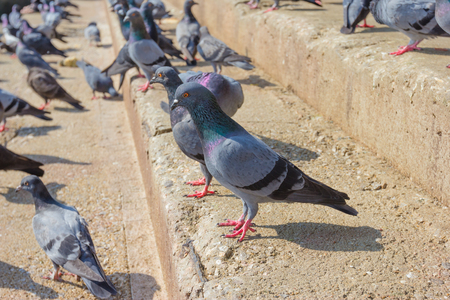 stair: Pigeon standing on stair Stock Photo