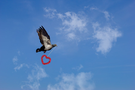 convey: convey love with flying dove