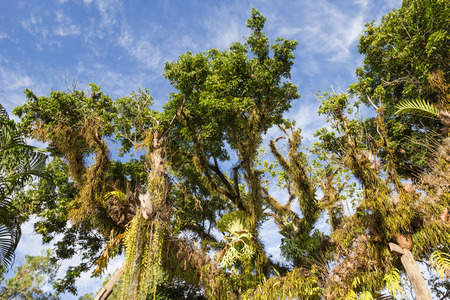 ferns and orchids: Platycerium perched on a tree Stock Photo