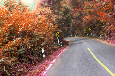 road in the forest with turn left traffic sign,filter effect Stock Photo