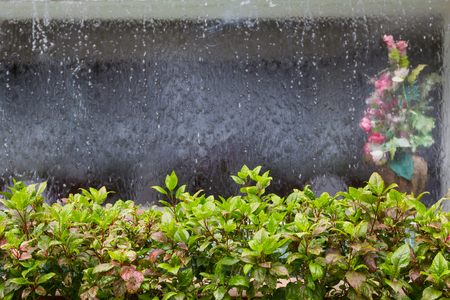 ornamental plants with curtain of water and flower vase blur Background Stock Photo