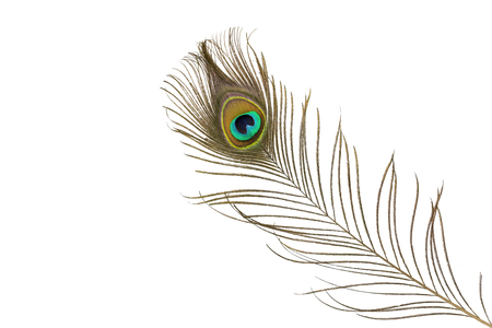 Peacock feathers isolated on white Фото со стока