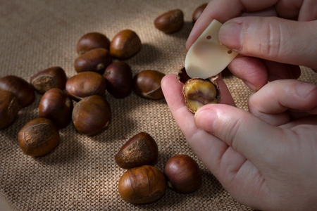 hand holding fresh chestnuts with sack bag background