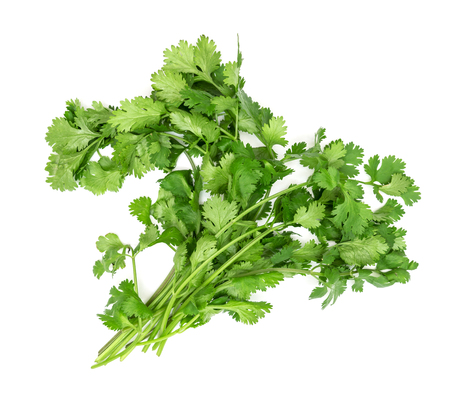 coriander isolated on white background 免版税图像