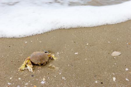 Death crab on beach sand Stock Photo