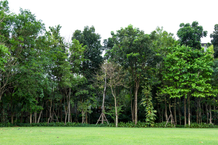 rows of trees with green grass Stock Photo