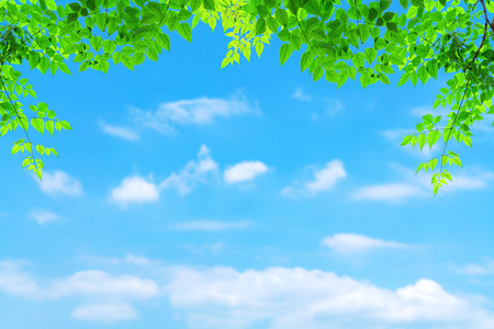 Green leaves pattern with blur blue sky and white cloud background