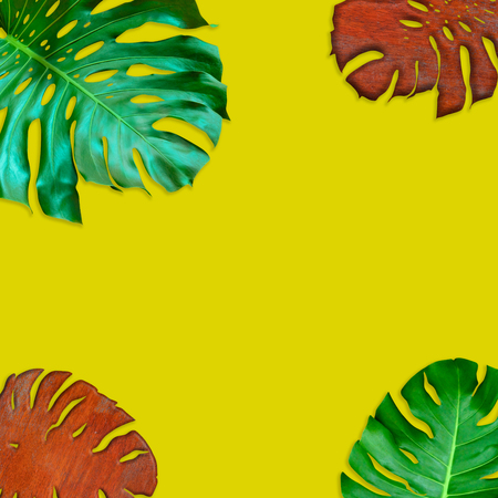 Green monstera leaves pattern for nature concept,tropical leaf on yellow background Stock Photo