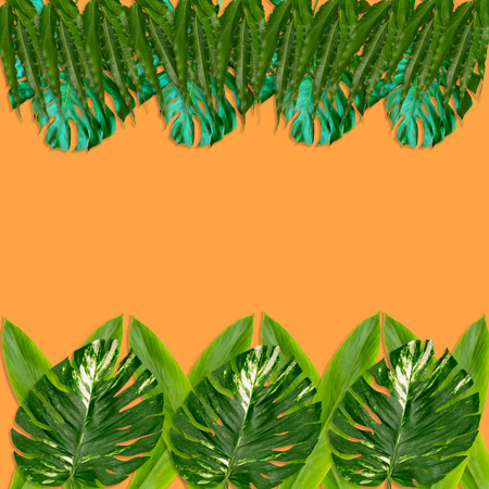 Green palm leaves pattern for nature concept,tropical leaf on orange background