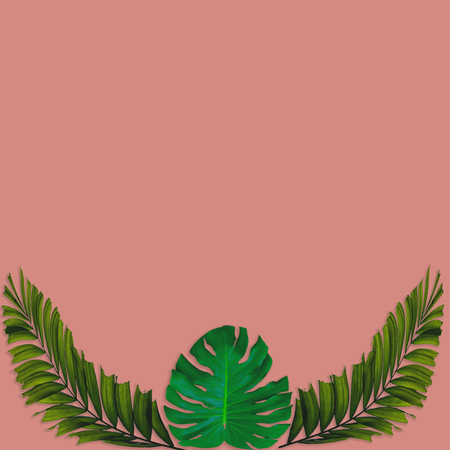 Green palm leaves pattern for nature concept,tropical leaf on pink background