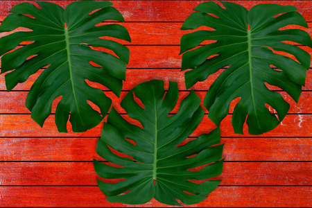 Green leaves pattern for nature concept,tropical leaf on red  brown wood textured background Stock Photo