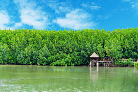 The forest mangrove and walkway bridge with blue sky background