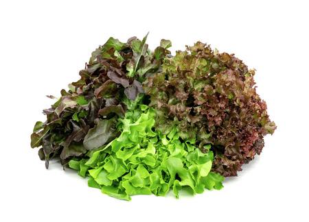 fresh lettuce leaves pattern isolated on white background