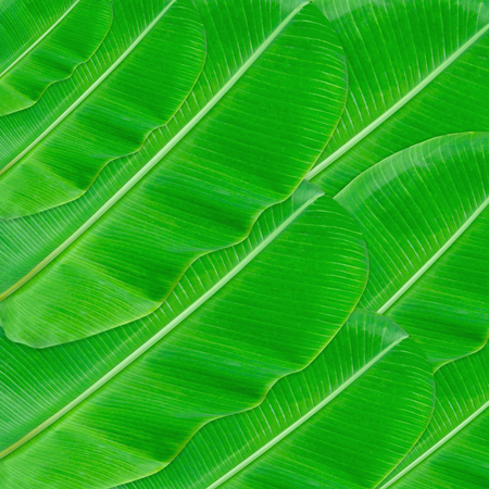 Green leaves pattern for nature concept,tropical leaf textured background Stock Photo