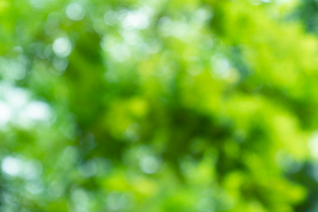 natural green bokeh abstract background,blurred textured