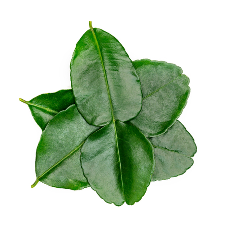 Green leaves pattern,leaf kaffir lime isolated on white background