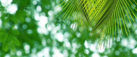Green leaves pattern for summer or spring season concept,leaf of palm with bokeh textured background Stock Photo
