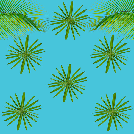 Green palm leaves pattern for nature concept,tropical leaf on blue background Stock Photo