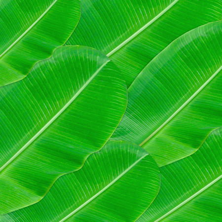 Green leaves pattern for nature concept,tropical leaf textured background Foto de archivo