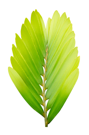 Green leaves pattern,leaf tree isolated on white background