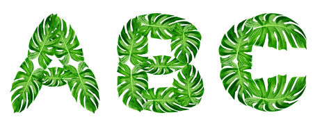 Green leaves pattern,font Alphabet a, b, c of leaf monstera isolated on white background