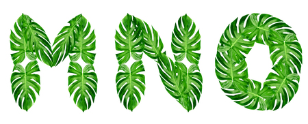 Green leaves pattern,font Alphabet m,n,o  of leaf monstera isolated on white background