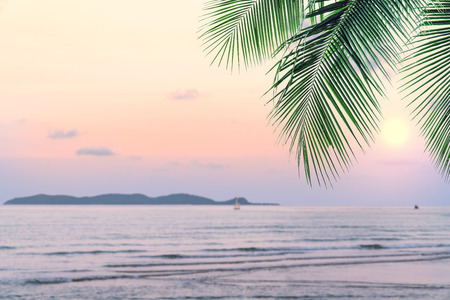summer sea with leaves palm at sunset and copy space,sky relaxing concept,beautiful tropical background for travel landscape Stock Photo - 118542737