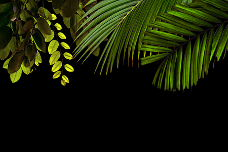 Green leaves pattern for nature concept,tropical leaf textured background with copy space