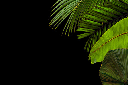 Green leaves pattern for nature concept,tropical leaf textured background with copy space Stock Photo - 118542742