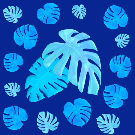 leaves monstera pattern isolated on blue background Stock Photo