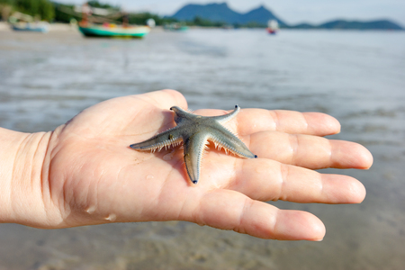 hand holding starfish with sea view background