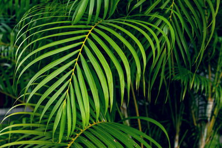 Green leaves pattern,leaf palm tree in the forest Stock Photo