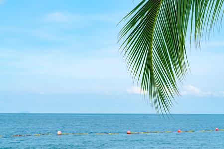 summer sea with leaves palm at sunset and copy space,sky relaxing concept,beautiful tropical background for travel landscape