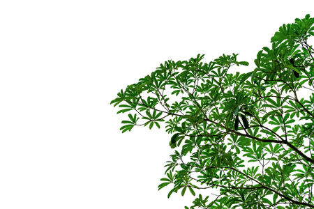 Green leaves pattern isolated on white background Banco de Imagens - 121698680