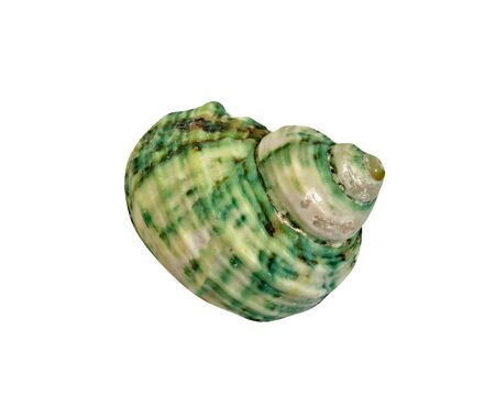 closeup green seashell  isolated on a white background