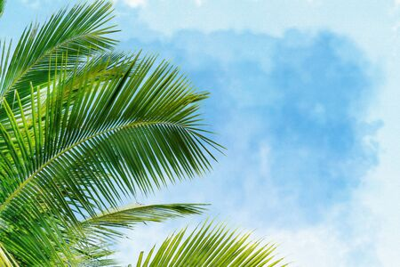 Green Leaves of palm ,coconut tree with white cloud and blue sky background, watercolor digital painting style
