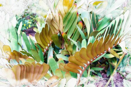 Green leaves pattern, leaf Zamia furfuracea in the forest, watercolor digital painting style