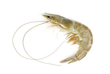 shrimp raw isolated on white background