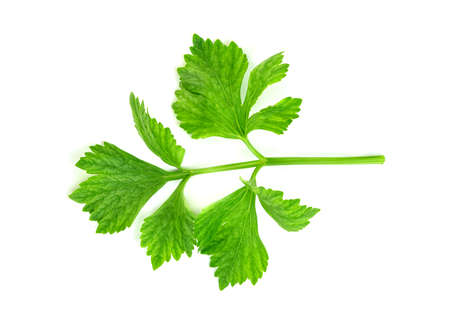 Fresh celery with root isolated on white background ,green leaves pattern