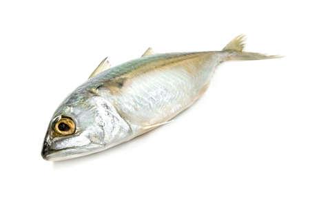 Fresh mackerel fish isolated on white background