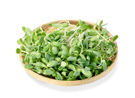 fresh Sunflower Sprout in basket isolated on white background ,Green leaves pattern ,Salad ingredient