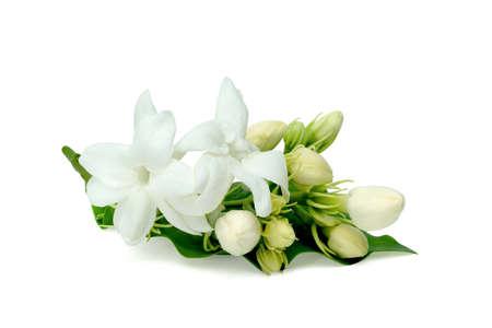 Jasmine flower isolated on white background